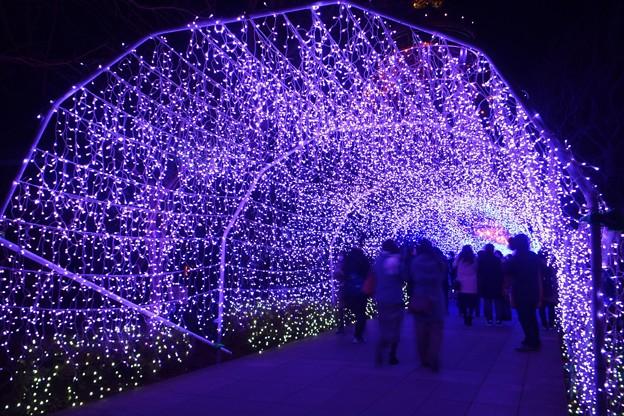 江ノ島サムエルコッキング苑のイルミネーショントンネル #湘南 #藤沢 #海 #surfing #江ノ島 #イルミネーション #art #illumination