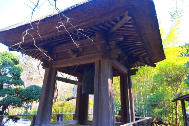 報国寺鐘楼 #鎌倉 #kamakura #temple #寺 #mysky