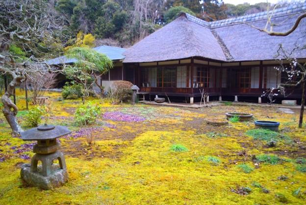 浄智寺庭園 #湘南 #鎌倉 #kamakura #寺 #temple #花 #flower