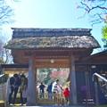 松岡山東慶寺 山門 #湘南 #鎌倉 #kamakura #寺 #temple #花 #flower