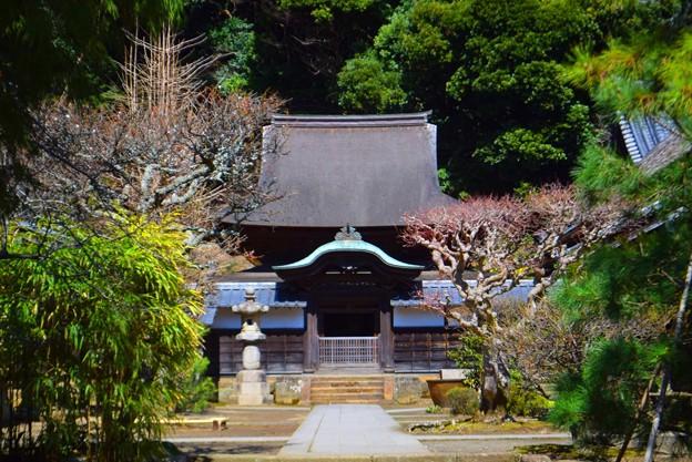 国宝・円覚寺舎利殿 #湘南 #鎌倉 #kamakura #mysky #寺 #temple