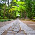 寿福寺参道 #鎌倉 #kamakura #寺 #temple