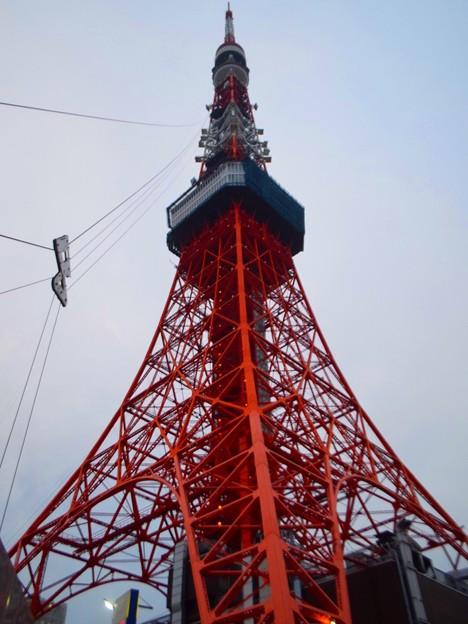 東京タワー #tokyo #tokyotower #東京 #東京タワー #carpshapedstreamer #鯉のぼり #mysky