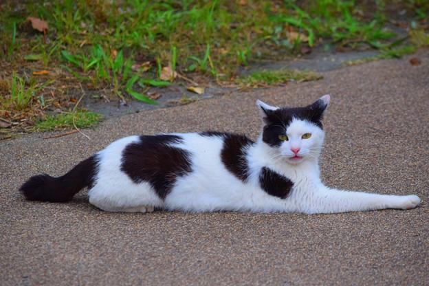 湘南・鵠沼海岸のニャンコ #湘南 #藤沢 #海 #波 #猫 #animal #mysky #cat
