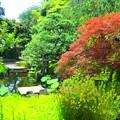 写真: 長谷寺庭園 #鎌倉 #湘南 #kamakura #寺 #temple #長谷寺