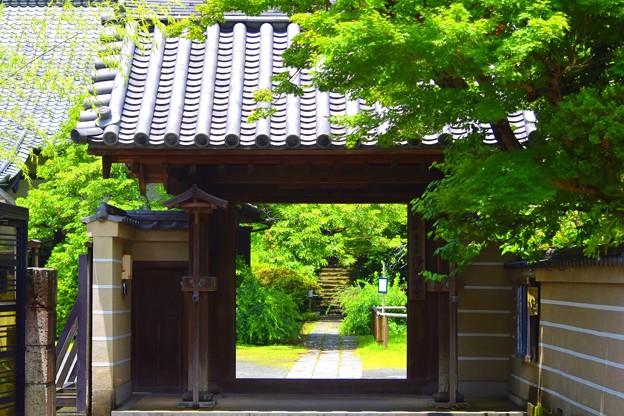 写真: 泉谷山浄光明寺 山門 #鎌倉 #kamakura #湘南 #寺 #temple #mysky #花 #flower