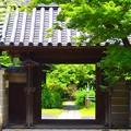 泉谷山浄光明寺 山門 #鎌倉 #kamakura #湘南 #寺 #temple #mysky #花 #flower
