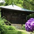 写真: 浄光明寺不動堂 #鎌倉 #kamakura #湘南 #寺 #temple #mysky #花 #flower #紫陽花