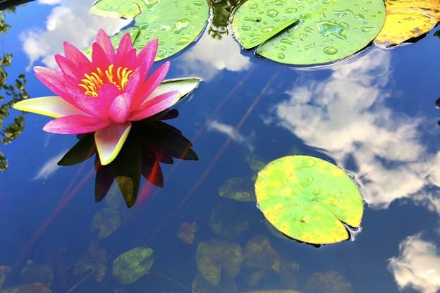 水鏡の空と睡蓮 #湘南 #鎌倉 #寺 #temple #mysky #花 #flower #睡蓮 #sky