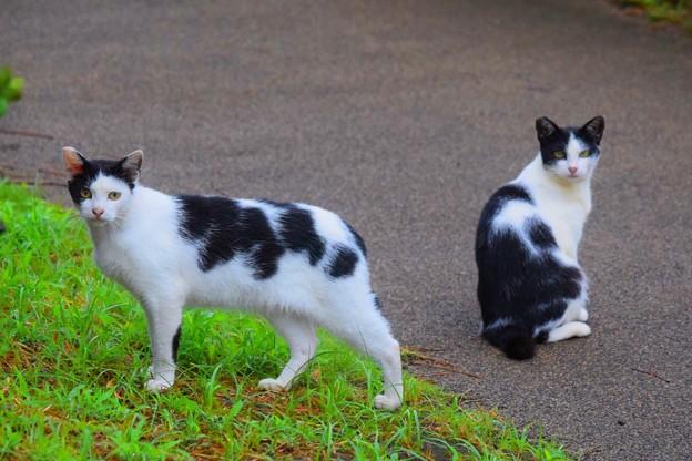 湘南・鵠沼海岸のニャンコ #湘南 #藤沢 #海 #波 #wave #surfing #wave #mysky #cat #猫 #animal
