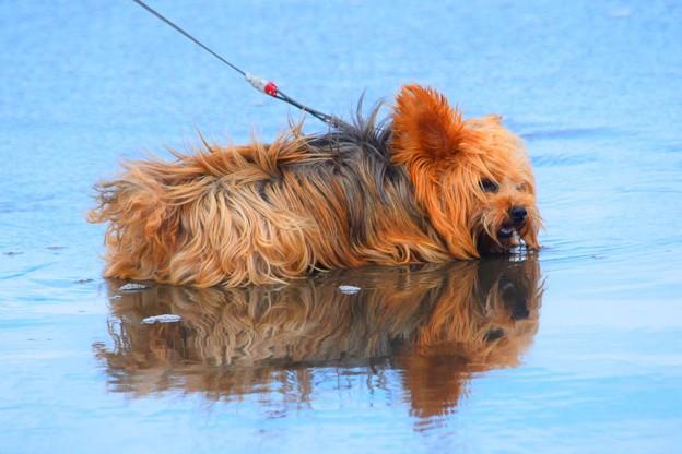 お散歩ワンコ@湘南・鵠沼海岸 #湘南 #藤沢 #海 #波 #wave #surfing #mysky #犬 #dog #犬