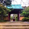 行時山 光則寺 山門 #湘南 #鎌倉 #寺 #花 #shonan #kamakura #flower #temple