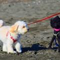 Photos: お散歩ワンコ@湘南・鵠沼海岸 #湘南 #藤沢 #海 #波 #wave #surfing #mysky #犬 #animal #dog