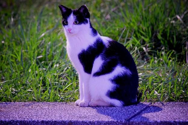 湘南・鵠沼海岸のニャンコ  #湘南 #藤沢 #海 #波 #wave #surfing #mysky #猫 #animal #cat