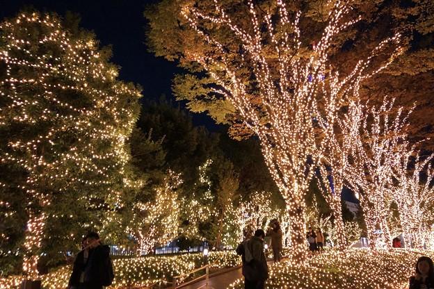 サザンテラスのキラキライルミネーション #新宿 #東京 #クリスマス #イルミネーション #shinjuku #christmas #illumination