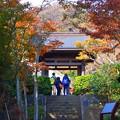 扇谷山海蔵寺 山門 #湘南 #kamakura #鎌倉 #temple #寺 #mysky #紅葉 #flower #花
