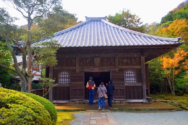 海蔵寺薬師堂 #湘南 #kamakura #鎌倉 #temple #寺 #mysky #紅葉 #flower #花