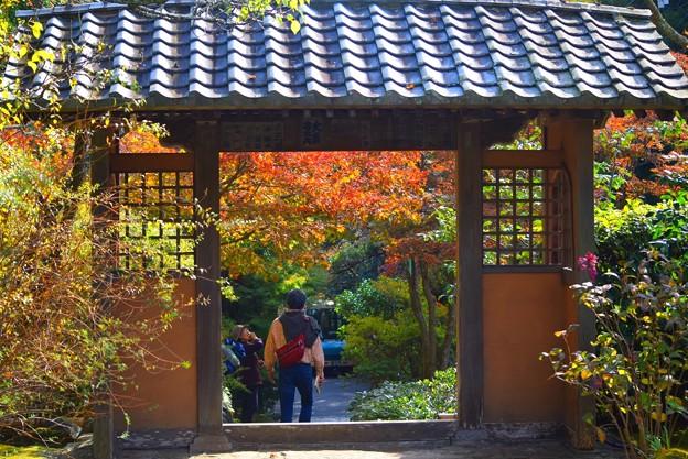 色付く海蔵寺の紅葉 #湘南 #kamakura #鎌倉 #temple #寺 #mysky #紅葉