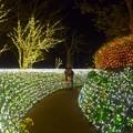 Photos: 煌びやかな江ノ島亀ヶ岡広場 #湘南 #藤沢 #海 #クリスマス #イルミネーション #wave #illumination #christmas