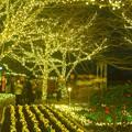 Photos: キラキラ輝く江ノ島のイルミネーション #湘南 #藤沢 #海 #クリスマス #イルミネーション #wave #illumination #christmas