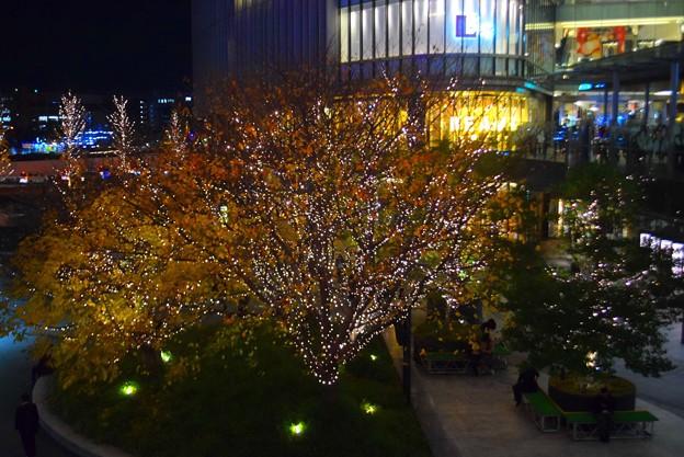 グランフロント大阪の紅葉とイルミネーション #大阪 #クリスマス #イルミネーション #osaka #illumination #christmas #xmas