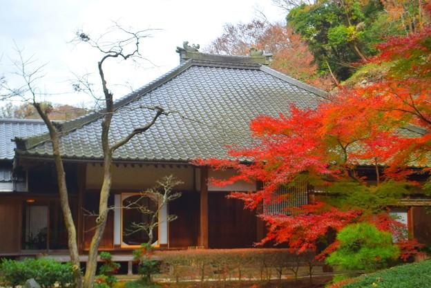 明月院後庭園からの本堂丸窓  #mysky #湘南 #kamakura #鎌倉 #temple #寺 #紅葉 #autumnleaves