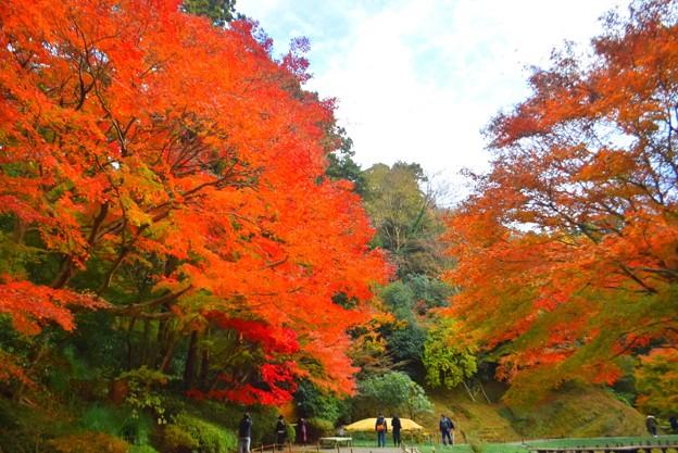 萌える明月院後庭園の紅葉 #mysky #湘南 #kamakura #鎌倉 #temple #寺 #紅葉 #autumnleaves