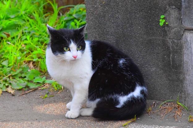 湘南・鵠沼海岸のニャンコ #湘南 #藤沢 #海 #波 #wave #surfing #mysky #猫 #cat #animal
