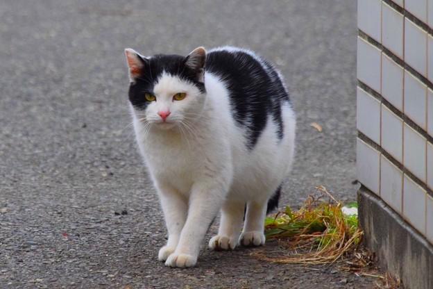 湘南・鵠沼海岸のニャンコ #湘南 #藤沢 #海 #波 #wave #surfing #mysky #animal #猫 #cat