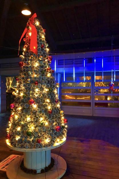 湘南港のクリスマスツリー #江ノ島 #湘南 #イルミネーション #クリスマス #illumination #christmas #merrychristmas
