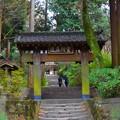金宝山浄智寺山門 #湘南 #kamakura #鎌倉 #temple #寺 #mysky #花 #flower
