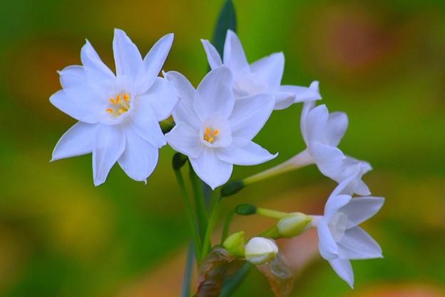 ホワイトリリー@浄智寺 #湘南 #kamakura #鎌倉 #temple #寺 #mysky #花 #flower