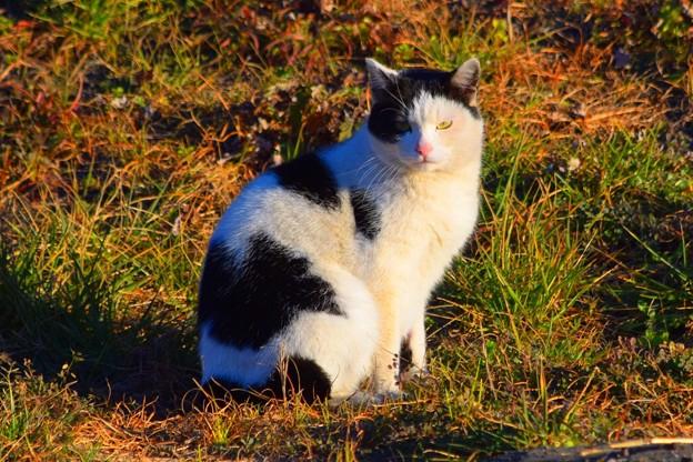 湘南・鵠沼海岸のニャンコ 湘南 #藤沢 #海 #波 #wave #surfing #mysky #猫 #animal #cat