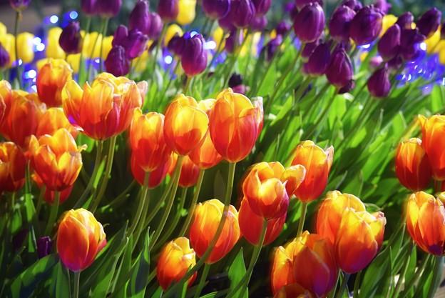 Parasol Flower - 写真共有サイト「フォト蔵」