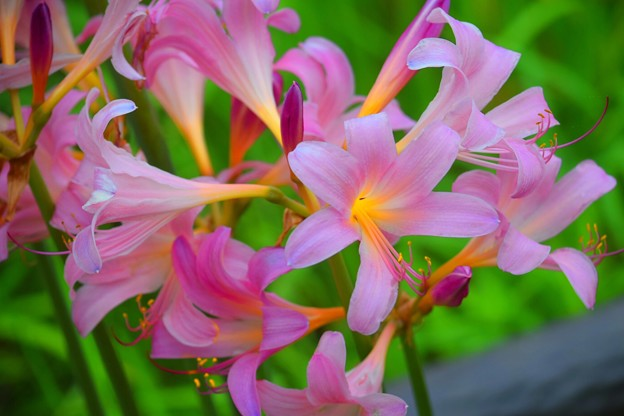 写真共有サイト「フォト蔵」   紫色の花, 季節の生花種類, 植物