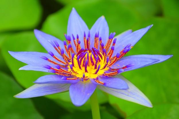 なでしこ♪ #flower #nadeshiko ♪ - 写真共有サイト「フォト蔵」
