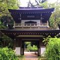 Photos: 鎌倉五山第四位浄智寺鐘楼門 #湘南 #鎌倉 #kamakura #寺 #temple #花 #flower