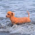 Photos: お散歩ワンコ@湘南・鵠沼海岸 #湘南 #藤沢 #海 #波 #wave #surfing #サーフィン #mysky #sea #dog #animal #dog #beach