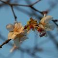 写真: 小石川後楽園1