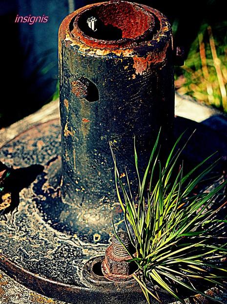 Photos: 酸化と緑化......