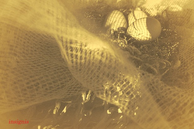 Photos: 『第101回モノコン』コケッコーの巣の上で…