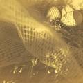 『第101回モノコン』コケッコーの巣の上で…