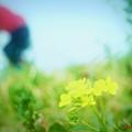 春の詩.......