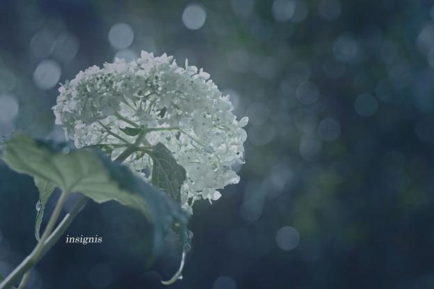 写真: 碧緑.......