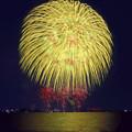 Photos: 渡良瀬に咲く........