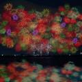写真: 彩色千輪菊........
