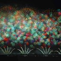 写真: 秋の千輪菊.......
