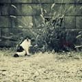 Photos: ぽっ!.......