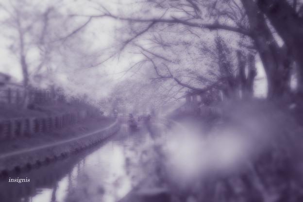 小江戸の春.......