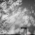 Photos: 朧桜.......